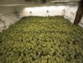 Medical Marijuana Manufacturer Thumbnail.jpg